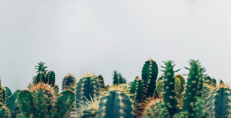 Le piante adatte per combattere le onde elettromagnetiche