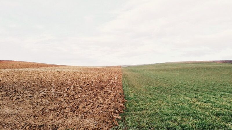 Come affittare un terreno agricolo o industriale: guida